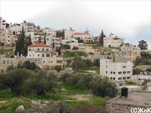 手前にあるのがオリーブの木。パレスチナではとても大切にされている。