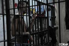 奥の牢屋には凶悪犯罪に問われている青年も