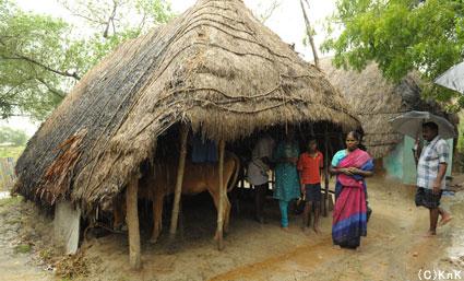 家の前に立つティラカワディの母親。 政府や親戚の支援で牛舎を改装して建てた家には壁などはない。